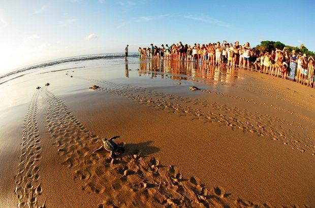 Situado no Nordeste do Brasil, em meio às águas do Oceano Atlântico, Fernando de Noronha está instal...