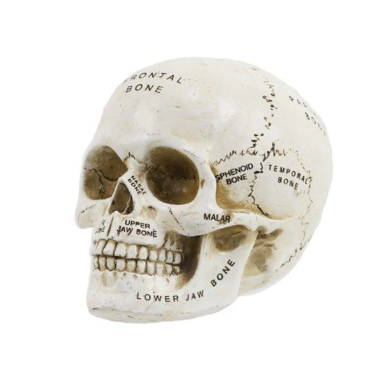 Find the Tabletop Resin Skull Head By Ashland® at Michaels