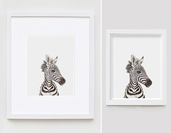 Baby Zebra Little Darling - The Animal Print Shop by Sharon Montrose