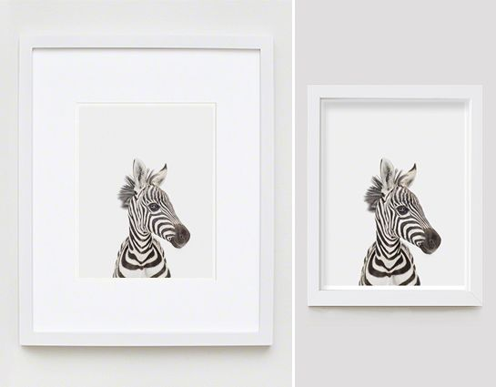 Baby Zebra Little Darling - The Animal Print Shop by Sharon Montrose