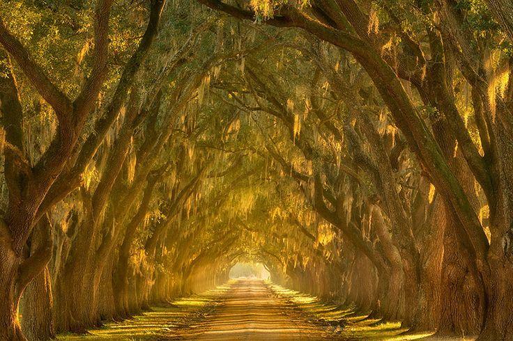 Il vicolo di querce lungo il Mississippi fuori New Orleans, Louisiana