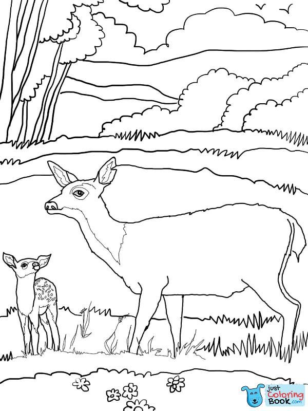 Baby Mule Deer With Mother Coloring Page With Images Deer