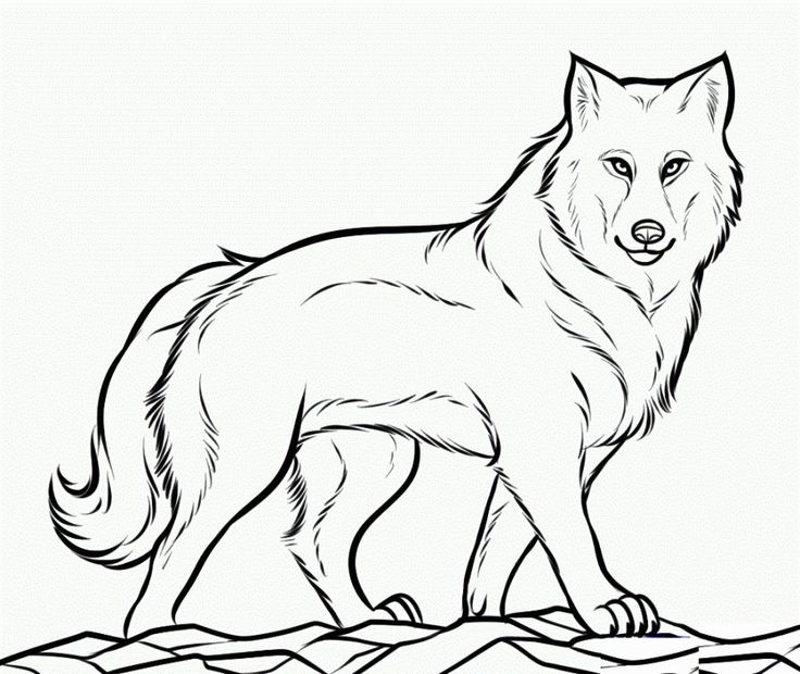 Drawing Lines Jpanel : Coloring pictures of wolves pages pinterest