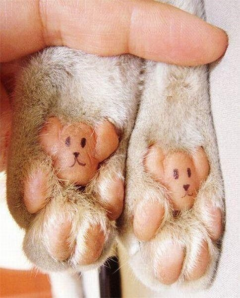 Teddy bear dog feet, how cute...if only my dog didn't have black feet.