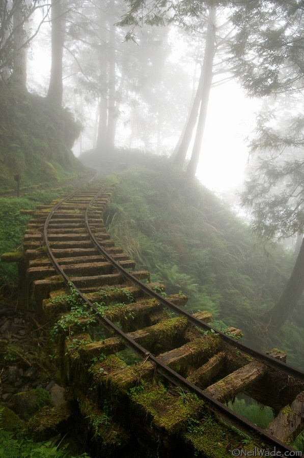 old-train-track-in-the-fog.jpg  An abandoned railway runs through a clouded forest on Tai Ping Shan Mountain, a popular wilderness area in northern Taiwan.  COPYRIGHT: 2008 Neil Wade  (more info http://www.reddit.com/r/pics/comments/q2glc/railroad_tracks_in_forest/  )