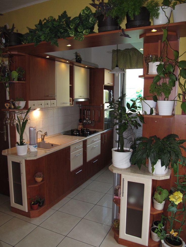egyedi konyhabútor növényszerető háziasszonynak :)