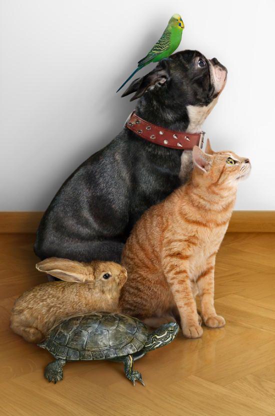 お前らがグッと来た画像を貼るスレ『大きい猫達』:哲学ニュースnwk