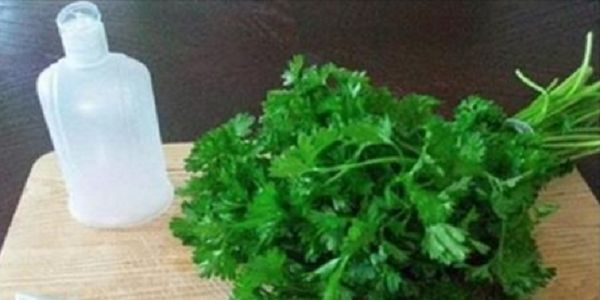 This homemade lotion made from parsley leaves and lemon (or apple cider vinegar) will assist you to lighten your skin and tidy your face from dark spots and freckles and your skin will get a healthy shine! You can prepare this cream really quickly and utilize it every day for your facial care. Parsley is …
