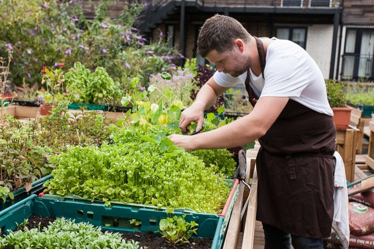 Chef Robin Gill, roof garden at The Dairy
