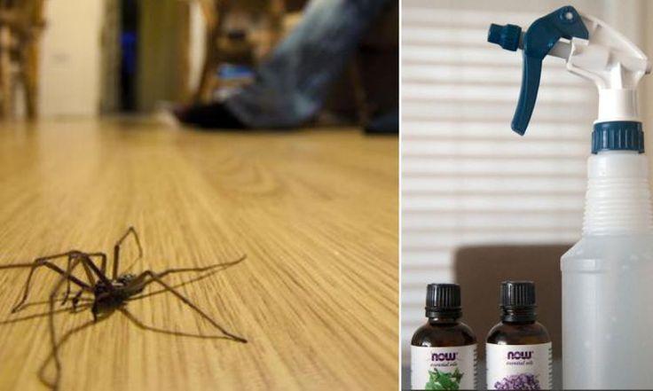 25 best trucs auto images on pinterest tips and tricks - Remede contre les araignees ...