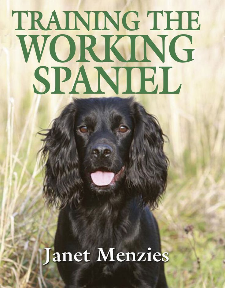 Training the Working Spaniel by Janet Menzies | Quiller Publishing. Containing chapters on training your spaniel from puppy to eighteen months to training and working your young dog in the field, the author gives plenty of advice aimed specifically at cockers as well as springers and other, lesser-known, spaniel breeds. Janet Menzies takes the reader all the way from pup to 'hup' to competing in field trials at the highest levels. #dog #training #spaniel