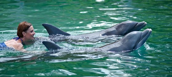 The Cayo Guillermo dolphinarium offers gastronomic services and educational tours to see these sea mammals in action.
