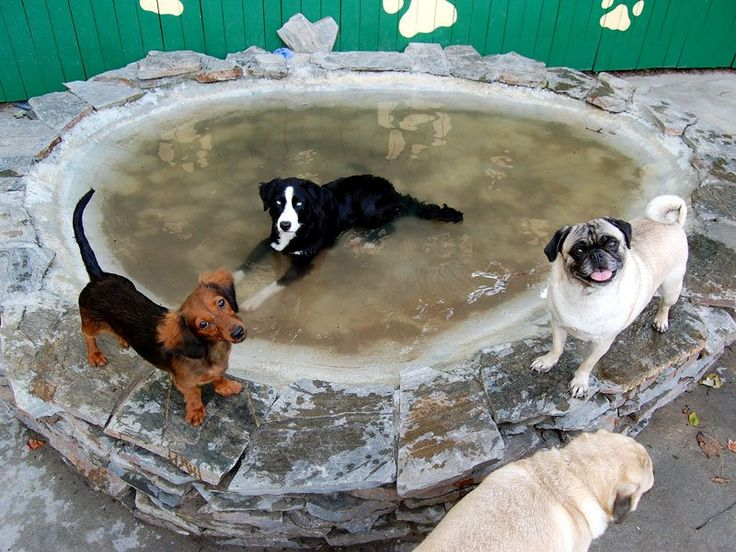 48 best images about doggy stuff on pinterest for dogs for Garden pool for dogs