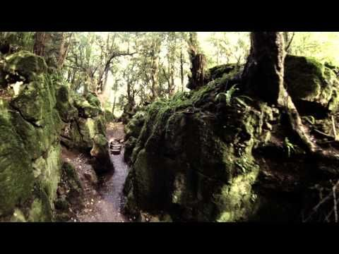 Welcome to Puzzlewood - in Forest of Dean