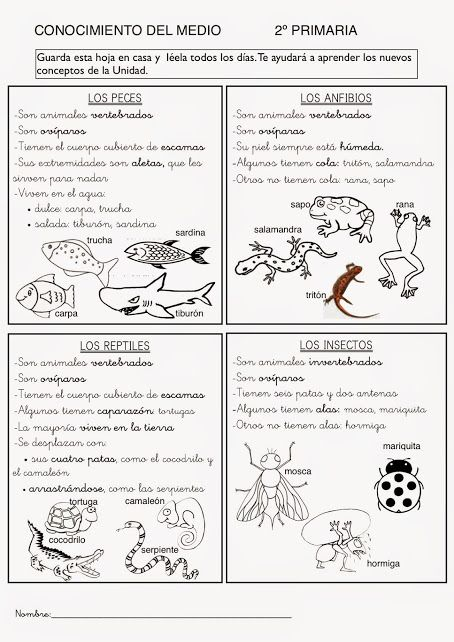 481 best Educacion images on Pinterest | Gym, Learning and School