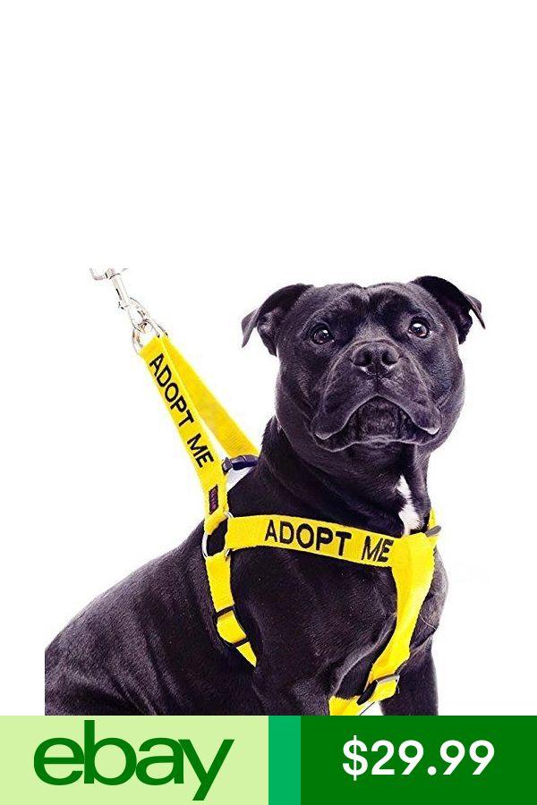 Dexil Pet Harnesses Ebay Pet Supplies Pet Supplies Pets Dogs