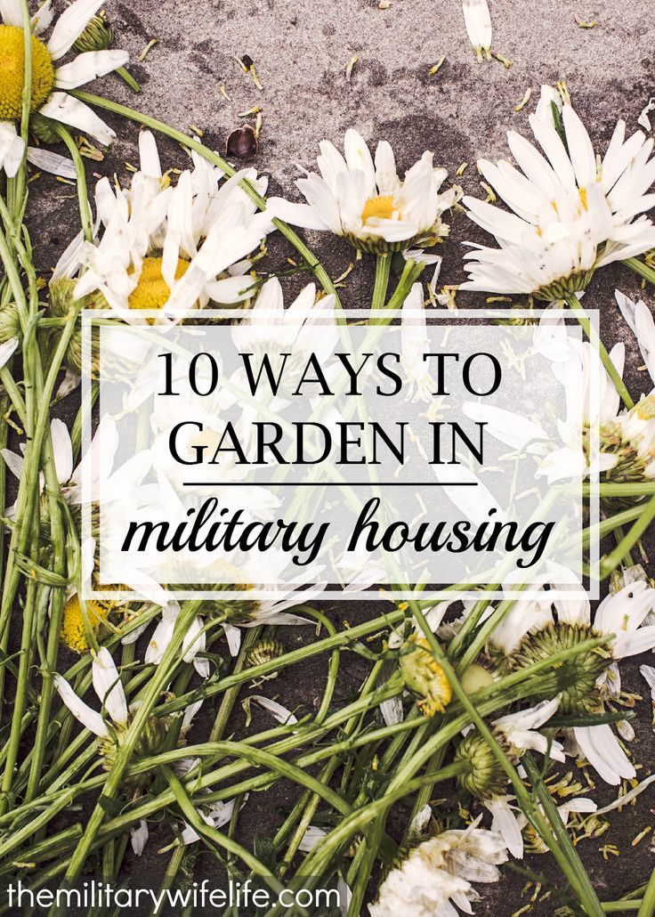 While gardening isn't exactly easy when you're living in military housing or on rental property, it IS possible. In fact, here's 10 ways you can do it! | themilitarywifelife.com