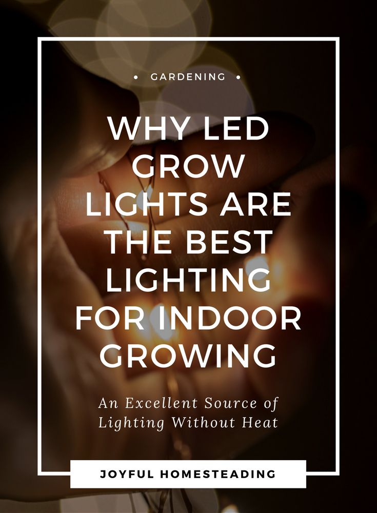 Led grow lights can reap huge benefits, especially when growing vegetables and other plants indoors.