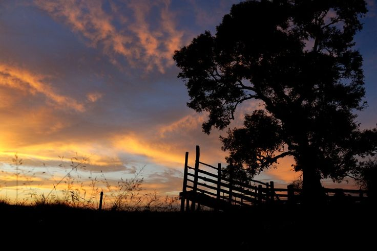 A sunrise photo of old stockyards in Mudgee. Photo by Amber Hooper.