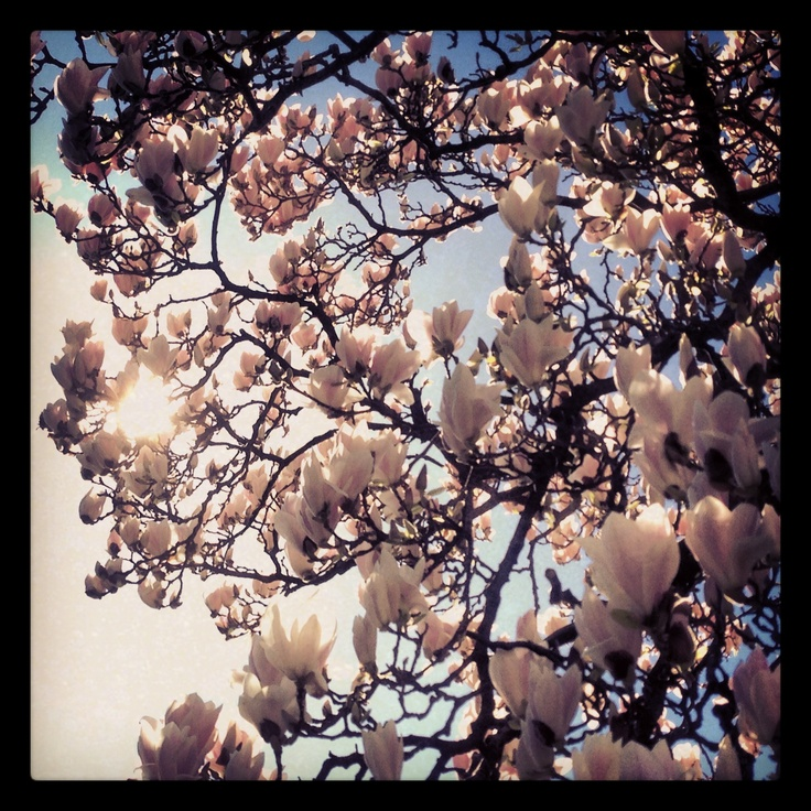 Frühling im Tessin