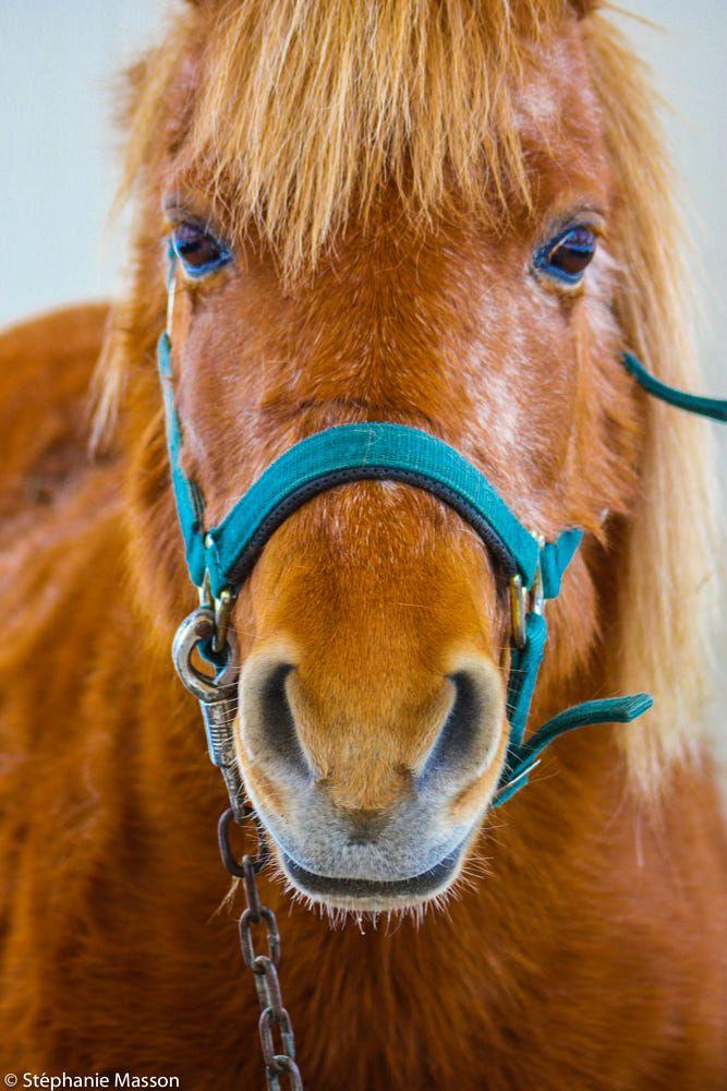 Piercing Gaze by Stéphanie Masson on 500px - Portrait of a horse.
