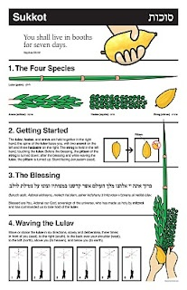 Etrog and Lulav How To