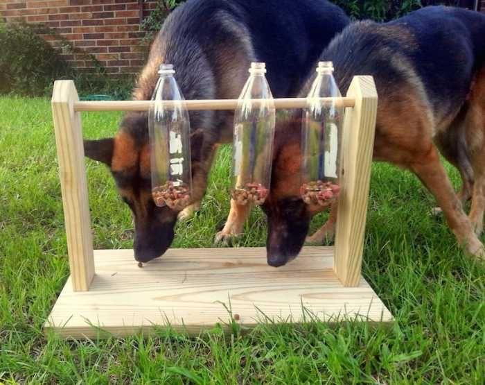 Juguete comedero perros casero                                                                                                                                                                                 Más