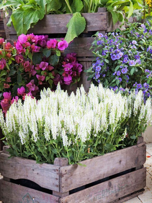 Recycled Crate Gives Rustic Look to Natural Style Decorative plant containers come in a variety of materials and styles, including recycled crates, giving a natural look to backyard space.