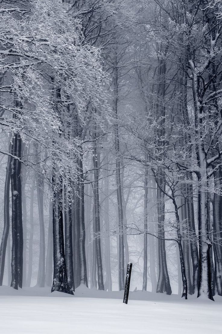Free stock photo of cold, snow, black-and-white, landscape