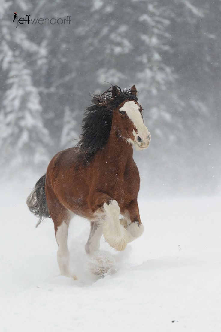 best 25 clydesdale horses ideas on pinterest clydesdale