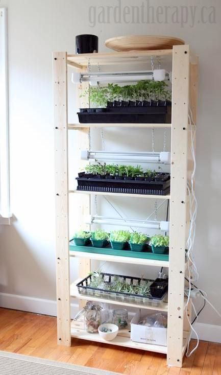 Set up seed shelf grow lights to start seeds in your home