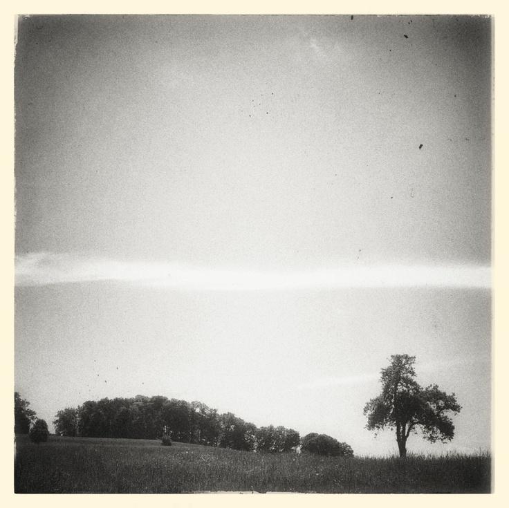 Tree by Thomas Lottermoser: http://pinterest.com/manganite/