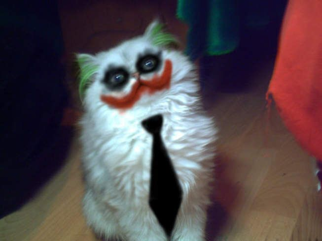 lol: Why So Serious, Funny Pics, Halloween Costumes, The Jokers, Funny Cat, Crazy Cat, Funny Animal, So Funny, White Cat