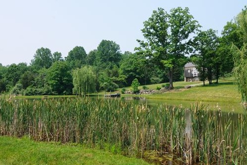 17 best images about pond designs on pinterest football for Pond reeds for sale