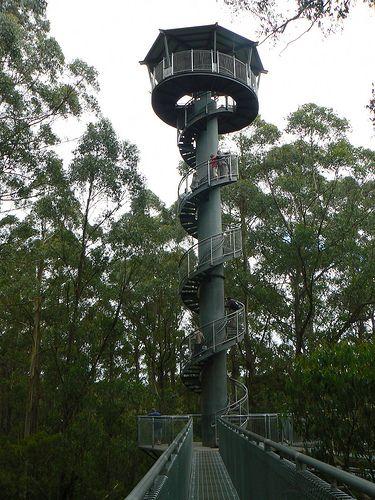 Otway Fly Treetop Walk, Otway Range, Victoria, Australia