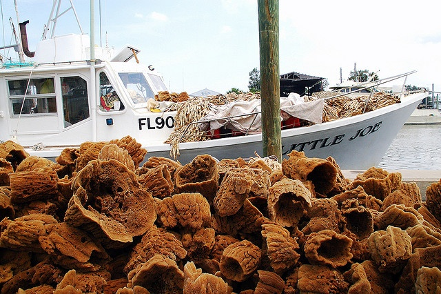 Natural sponges at Tarpon Springs sponge docks (Pinellas County, Florida)