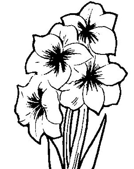 Colouring Pages Of Flowers In Vase : 505 best images about coloring flores on pinterest