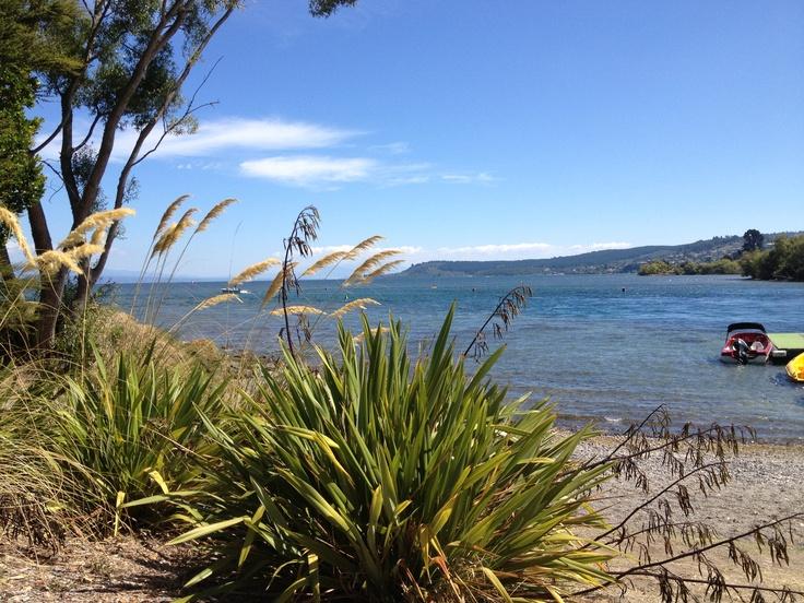 Flax at the lake