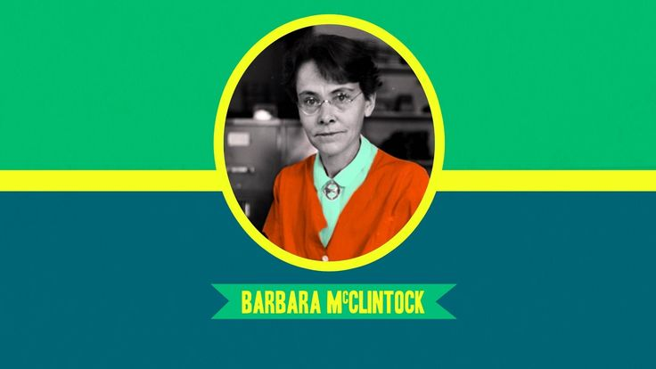 Barbara McClintock: Great Minds Hank tells us about another great mind in science - Barbara McClintock won the Nobel Prize in Physiology for her discovery of mobile genetic elements and remains the only woman to receive an unshared prize in that category.