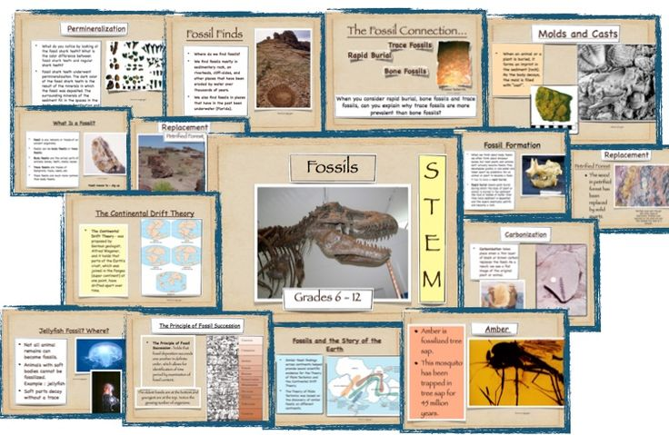 Fossil lesson plans high school