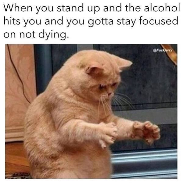 56 Hilarious Drinking Memes To Make You Laugh