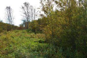 Hunting Land for Sale in Kansas - http://homes-in-wichita-kansas.com/Blog/hunting-land-for-sale-in-kansas/   #ChuckSchneweis, #HuntingLandInKansas, #RealtorInWichitaKansas