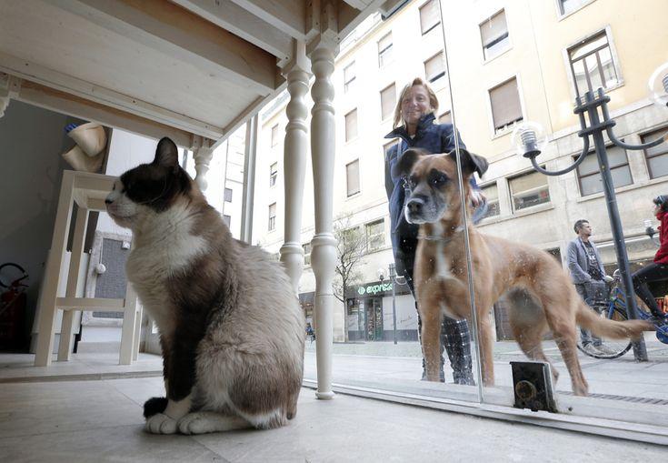 Un câine se uită la o pisică ce stă în interiorul Cafe Miagola, la Torino, sâmbătă, 22 martie 2014. Recent deschis, Miagola Cafe este un concept de bar în care pisicile şi oamenii pot bea o băutură şi se pot relaxa. Prima cafenea pentru pisici a fost deschis în Taiwan în 1998, urmată de altele în diferite oraşe europene, cum ar fi Budapesta, Berlin, Munchen, Paris sau Madrid. (  Marco Bertorello / AFP  ) - See more at…