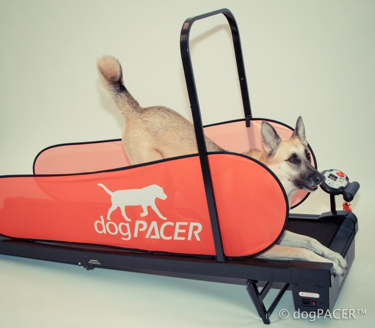 Posing on my dogPACER dog treadmill.