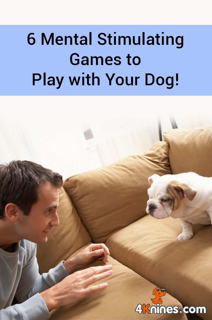 Whatever the reason you're stuck inside with your dog, it doesn't have to mean the end of the fun. Learn the 6 fun and easy ways to stimulate your dog's mind when you can't play outside, shared by Jodi Stone from @heartlikeadog. Read more here!