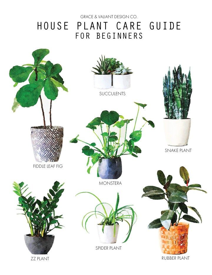 Plant Care Guide for Beginners | fiddle leaf fig, snake plant, monsters, ZZ plant, spider plant, rubber plant care