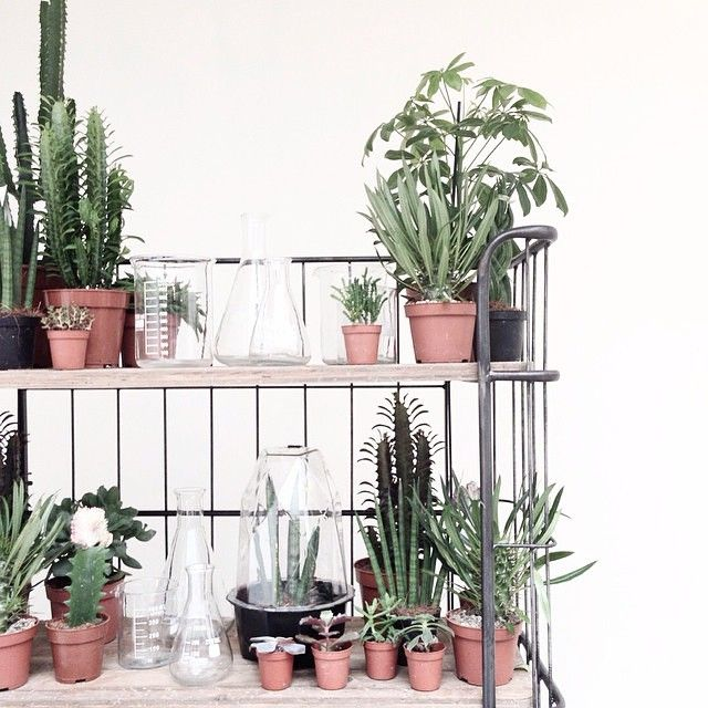 """Our industrial Trolley, photographed by @aprilandmay. #bepurehome #trolley #industrial #cactus #plants #green #styling #aprilandmay"" Photo taken by @bepurehome on Instagram, pinned via the InstaPin iOS App! http://www.instapinapp.com (02/18/2015)"