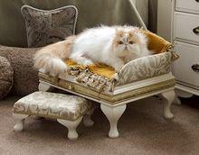 Luxury Belgravia Pet Bed and Matching Stool