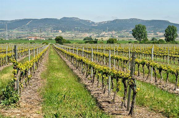 wine country - Haro, Spain