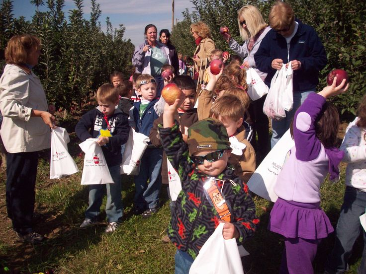 Each child on a Fall tour gets to pick an apple off one of our trees!